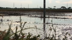 Group of Ducks and Goose Running over Muddy Water Filled Field in the Evening Stock Footage