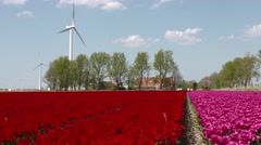 Wind park in a landscape with tulips in the Netherlands Stock Footage