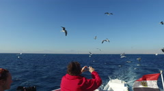Tourist taking photos of flock of seagulls flying over Red sea Stock Footage