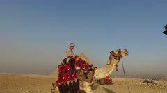 Young woman sitting on a camel at Giza pyramids Stock Footage