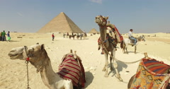 Camels for rent in front of the Great Pyramid of Giza. Stock Footage
