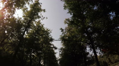 In city park alley with trees on sides. - stock footage