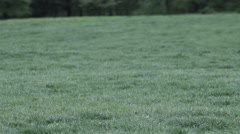 240 fps slow motion man running on the grass. Stock Footage