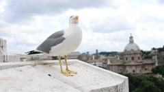 Seagull sitting on the parapet - a panorama of Rome Italy Stock Footage