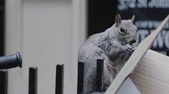 Urban Wildlife NYC slow motion establishing Stock Footage