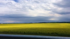 Driving by Yellow field of rape plant Stock Footage