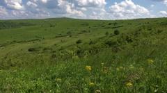 Summer yellow flower background, green fresh grass in slow wind Stock Footage