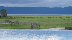 Infinity pool in the savannah of Tarangire national park Tanzania - stock footage