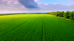 Aerial view of green wheat field Stock Footage