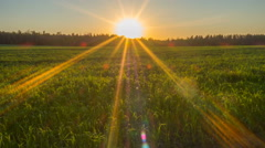 Beautiful sunset with sun rays in the field. Stock Footage