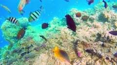 Colorful fish in a coral reef Stock Footage