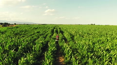 A girl walks from behind in rendered an enormous head of maize. Aerial video N. - stock footage