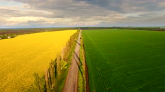 Aerial view of suburban road between colza and wheat fields Stock Footage