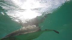 Beautiful sea turtle swimming underwater in ocean Stock Footage