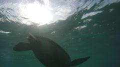 Cool sea turtle eating swimming underwater through ocean Stock Footage