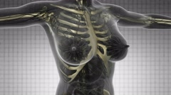 Science anatomy scan of human body with skeletal bones on white Stock Footage