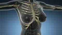 Science anatomy scan of human body with skeletal bones on blue Stock Footage