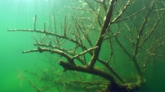 The sunken tree in a freshwater lake. - stock footage