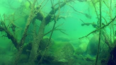 The sunken tree in a freshwater lake. Stock Footage