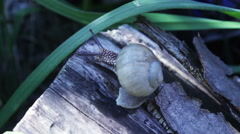 Snail Crawling On A Log Stock Footage