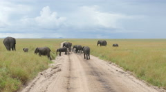 Elephants crossing in Serengeti National Park Tanzania - 4K Ultra HD Stock Footage