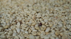 HD 1080 Raw white coffee beans close up Stock Footage