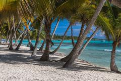 Coconut palm trees on the tropical island Saona, Dominican Republic - stock photo