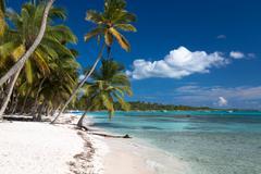 Beautiful caribbean beach on Saona island, Dominican Republic Kuvituskuvat