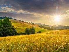 large meadow with herbs,  trees in mountain area at sunset - stock photo