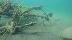 Driftwood overgrown with clams. - stock footage