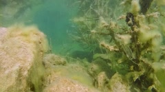 Underwater landscape with rocks, flooded tree. Stock Footage