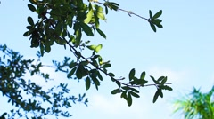 Oak Leaves and a Blue Sky Stock Footage