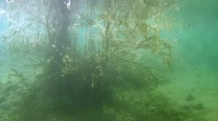 Approach to the flooded wood. Stock Footage