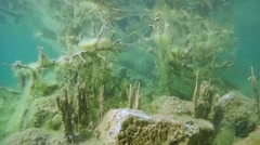 Underwater landscape with flooded trees. Stock Footage