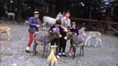 1961: Family petting young donkey mules at Pocono Wild Animal Farm. - stock footage