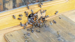 Closeup view of bees go in and out in the hive Stock Footage