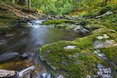 Low angle view of a small mountain creek in the High Fens, Ardennes, Belgium  Stock Photos