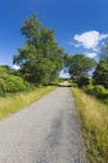 A road leading through wide moor landscape with some trees in the High Fens,  Stock Photos