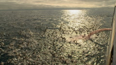 Seagulls flock to fish waste from the ship Stock Footage