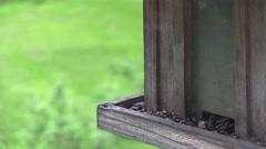 Tufted titmouse on feeder Stock Footage