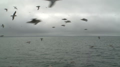 Seagulls soar behind a board of the fishing trawler. - stock footage