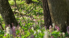 View Of A Fresh Spring Forest, close-up Stock Footage