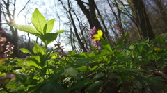 View Of A Fresh Spring Forest with sun reflection Stock Footage