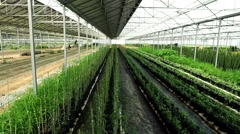 Aerial video in a greenhouse with a cultivation. The camera moves inside. N. Stock Footage