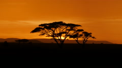 Typical African golden sunset with Acacia tree in Serengeti Tanzania Stock Footage