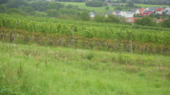A vineyard in the village Eisingen Stock Footage