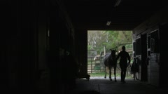Horse Coming into Barn/Stables Wide Angle Stock Footage
