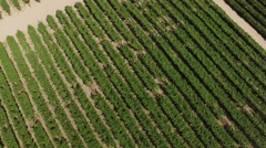 Aerial 4k flyover of crops in Coachella Valley Stock Footage