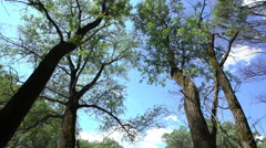 View Of The Danube Floodplain Forest Stock Footage