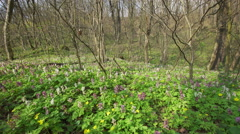 View Of A Fresh Spring Forest in early March Stock Footage